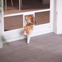 Katzenklappe-Neher